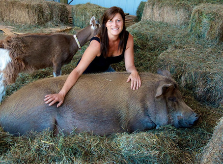 PIGS..And how I became a pig mom!