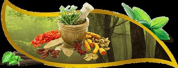 ayurvedic-medicine-manufacturer.png