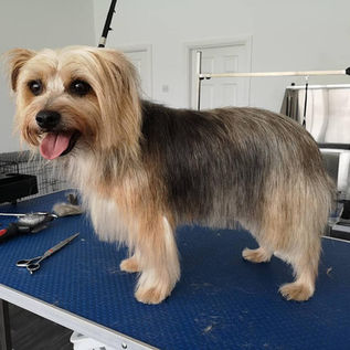 oh my dog Wirral - Professional Dog Grooming Salon / Dog Groomers