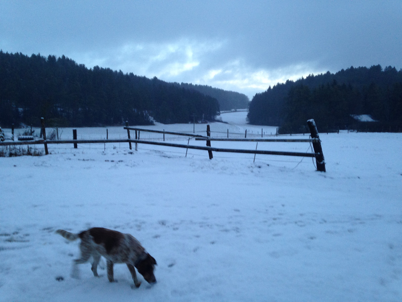 Paulinchen im Schnee