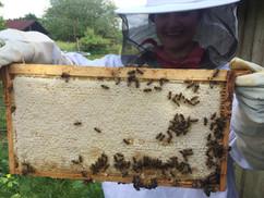 Honig Ernte