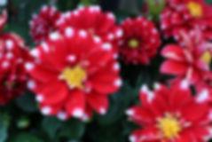 scituate flower farm