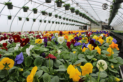 warwick flower farm