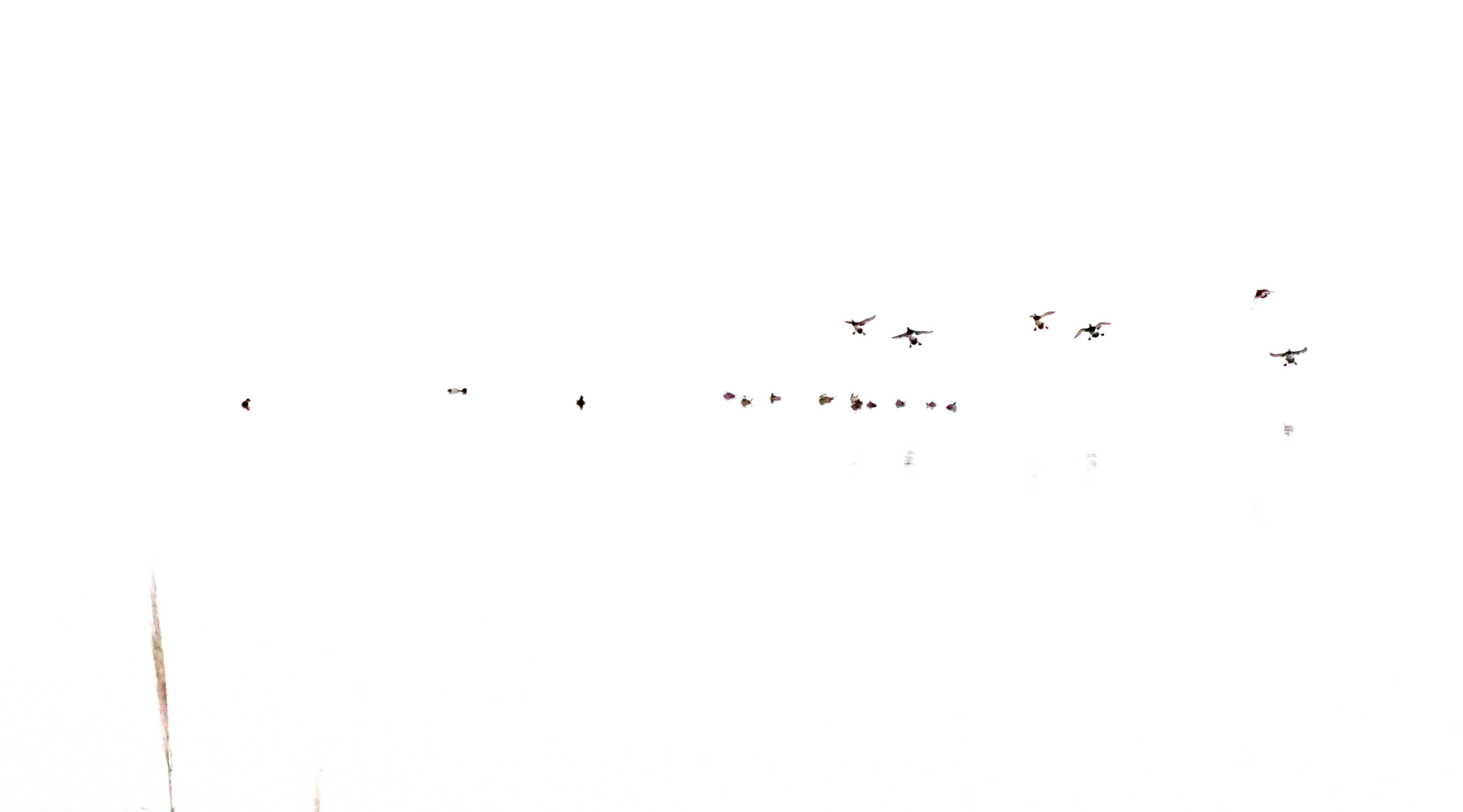 654169CD-E062-40B3-8246-FE2EE7C36C5B_1_2