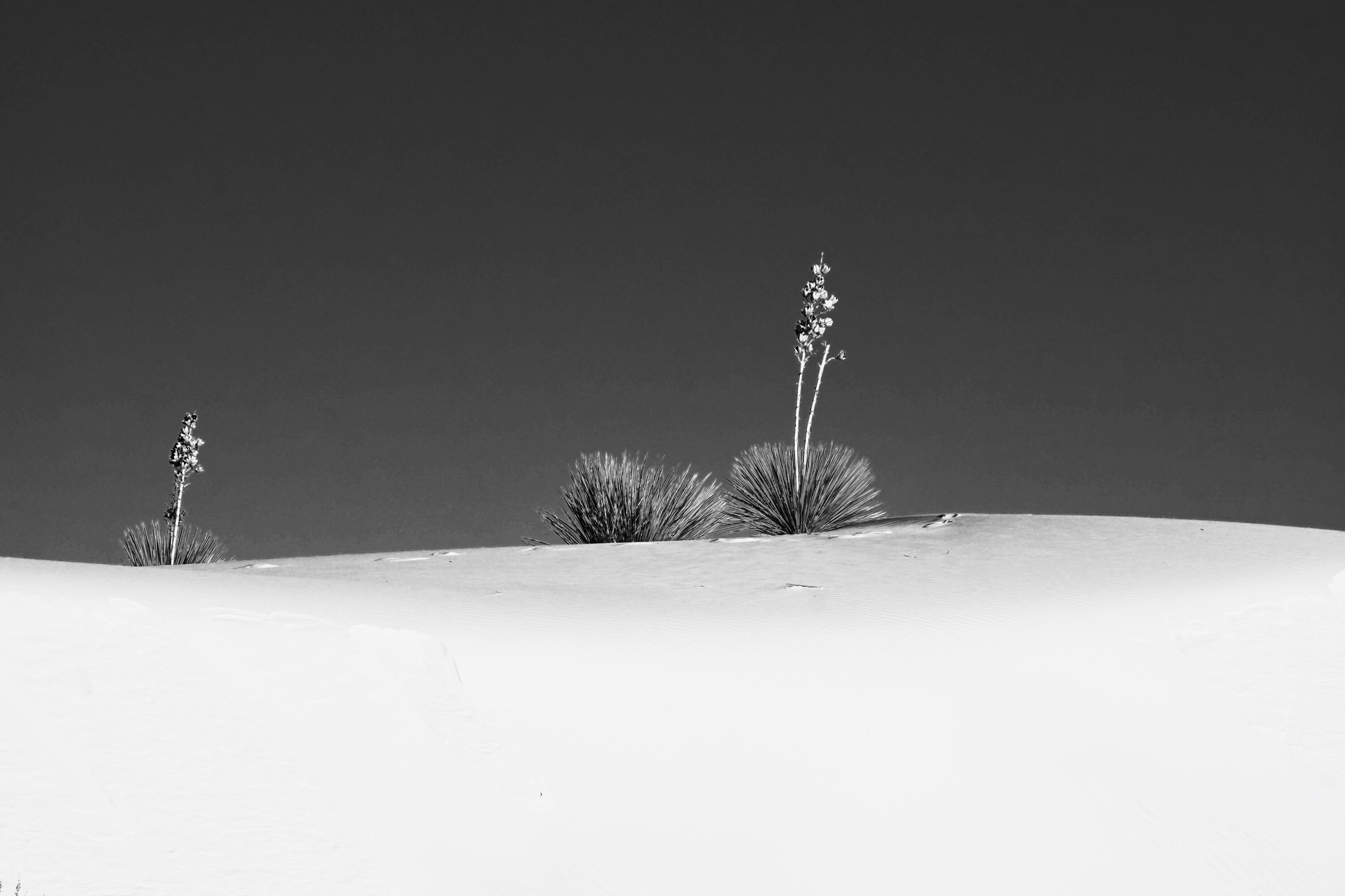 White Sands, NP