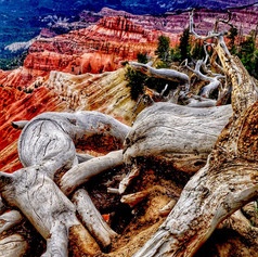 Old Tree and Red Rocks