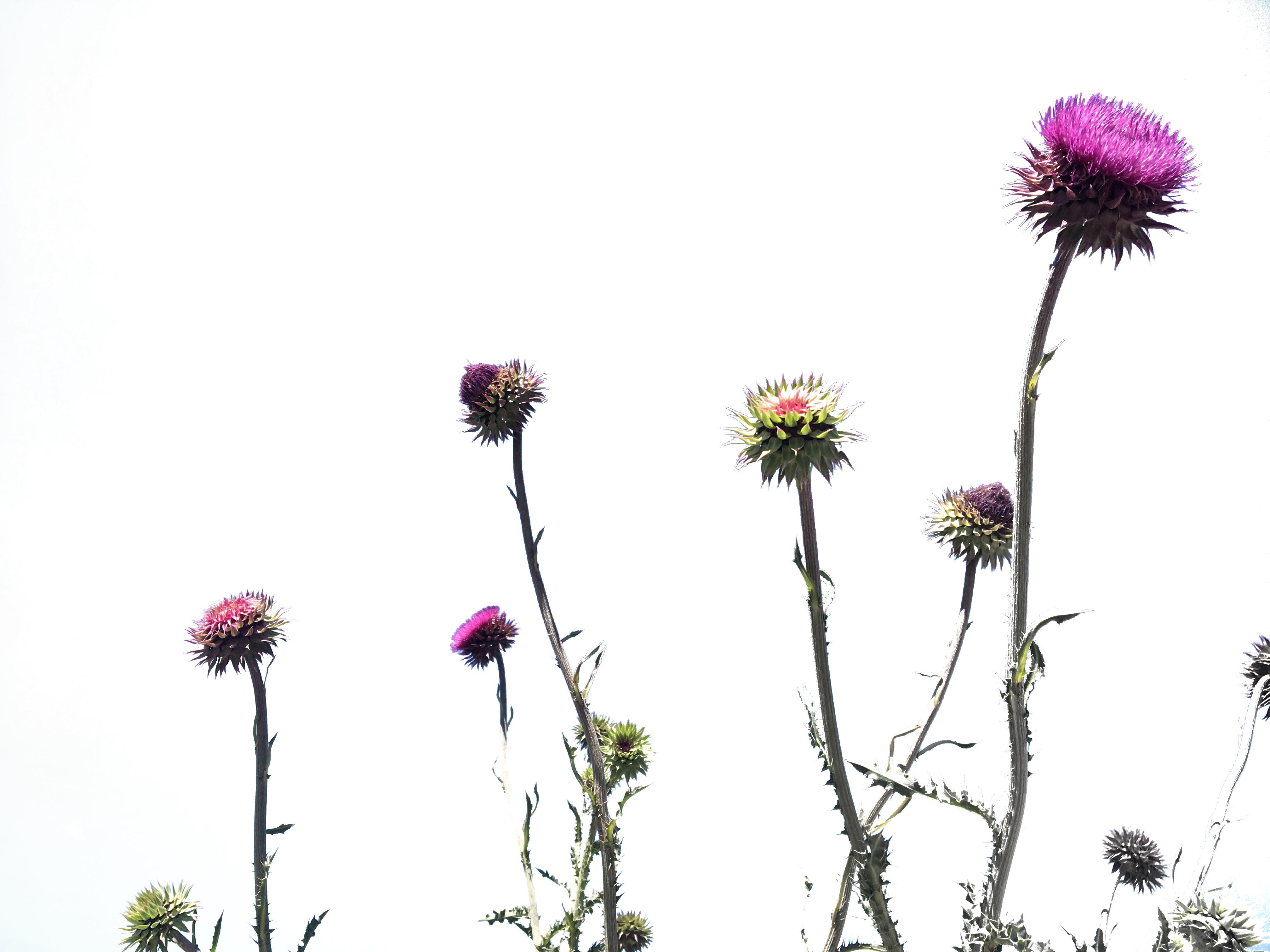 Pretty Flowers All in a Row