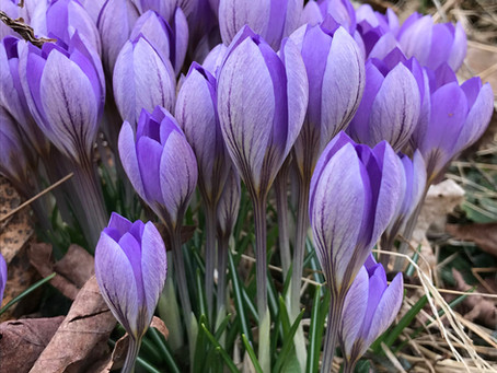 Crazy Times...  but Spring's Still Springing