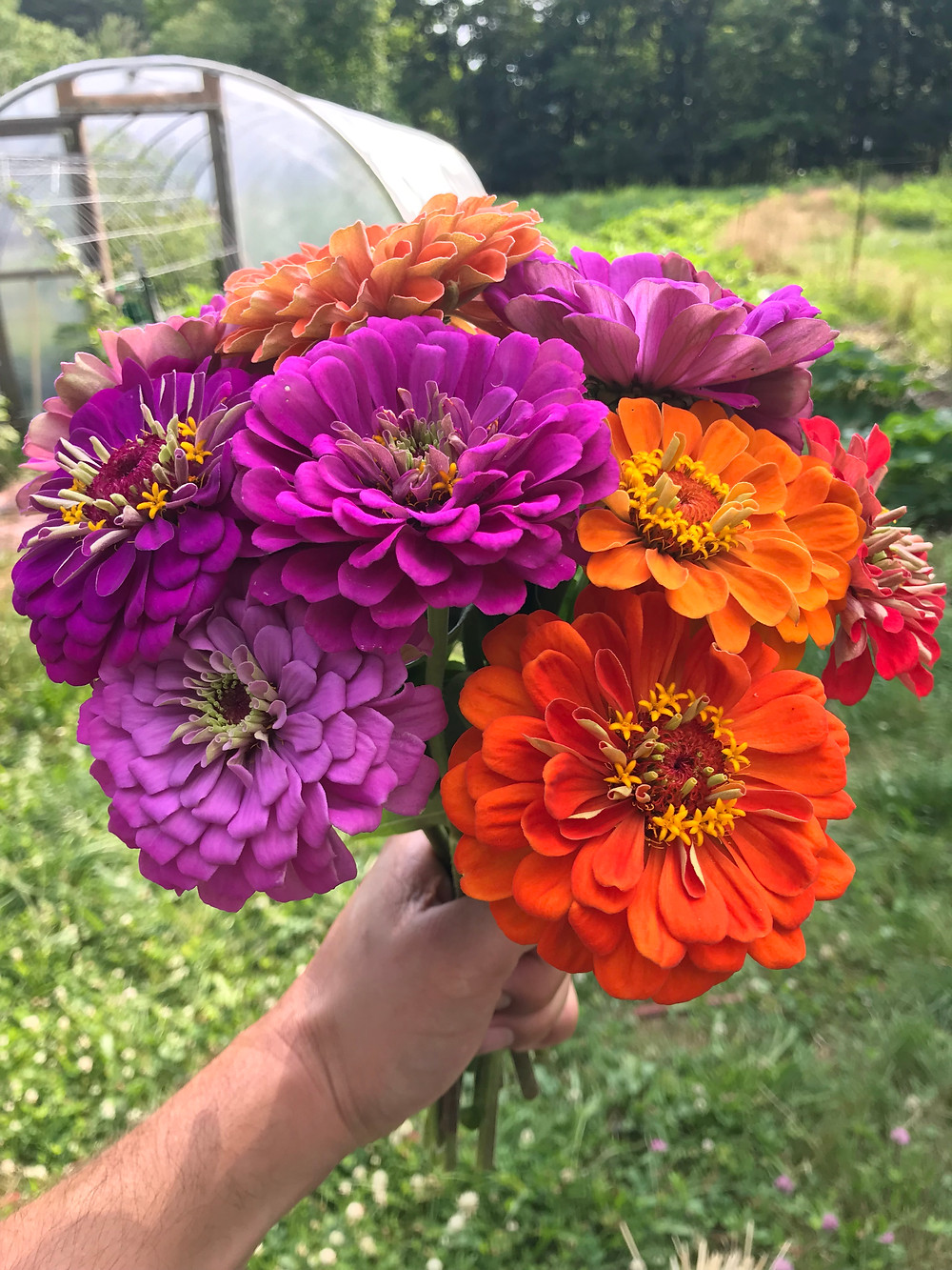 The Zinnias are finally in bloom!