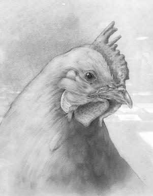"""""""Chicken Madness"""""""