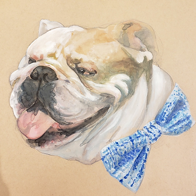 """Bulldog Study"""