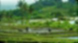 Terraced Rice Fields in Bali, Indonesia