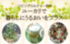 ユーカリチラシ①.jpg
