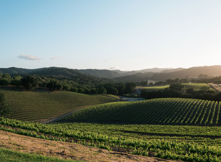Tips for Buying and Owning a Vineyard
