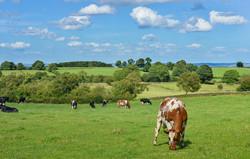 livestock-601277_960_720