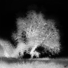 White tree in darkness