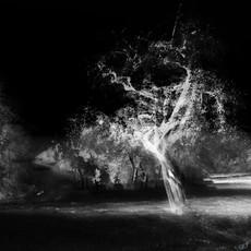 tree fragmento 02