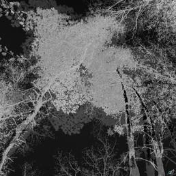 0 Transformation of Nature_02 XVII_700.j