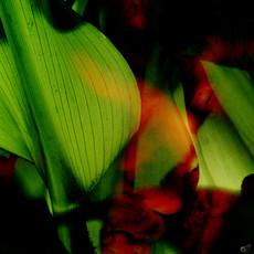Complimento Florales 02