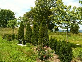 mem garden closeup.JPG