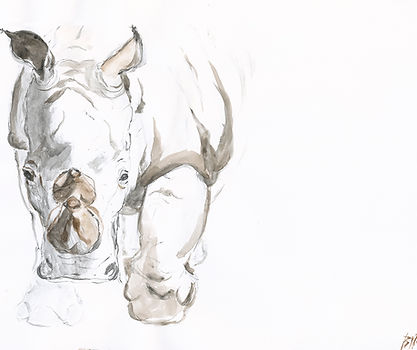 Painting of Southern White rhino in Ol Pejeta Conservancy