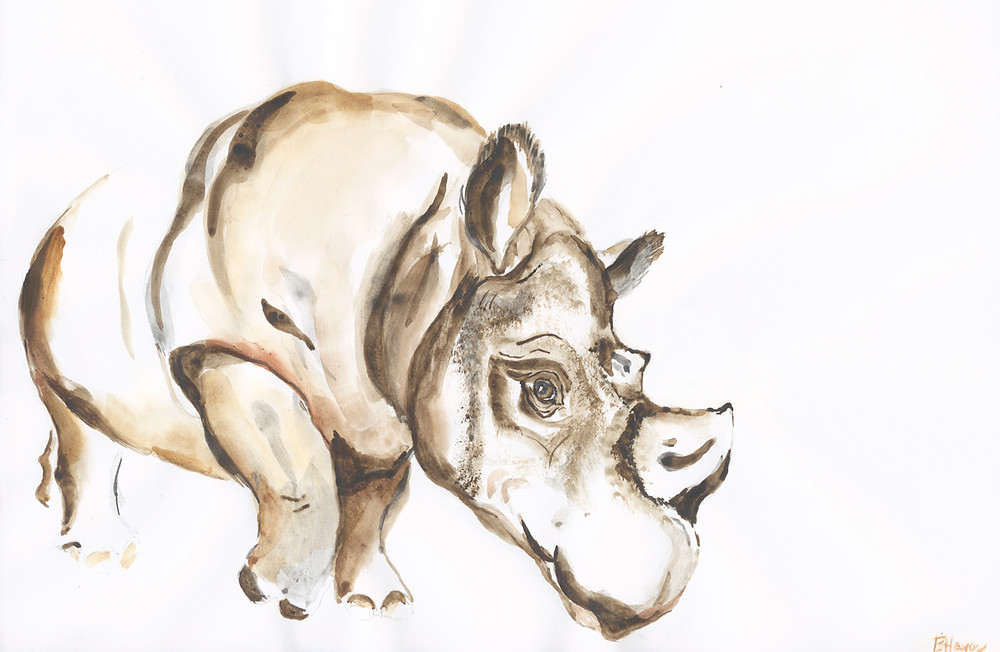 Sumatran Rhino-inspired by a photo taken by Mark Carawardine