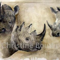 Etude de Rhinoceros  Peinture de l'artiste Christine Boudin