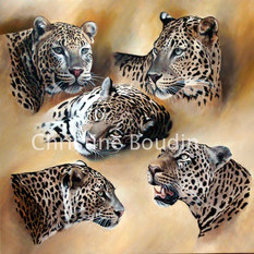 etude leopards  Peinture de l'artiste Christine Boudin