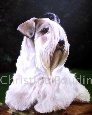 Sealyham Terrier  Peinture de l'artiste Christine Boudin