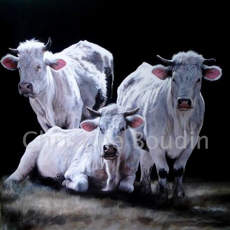 les 3 charolaises par Christine Boudin