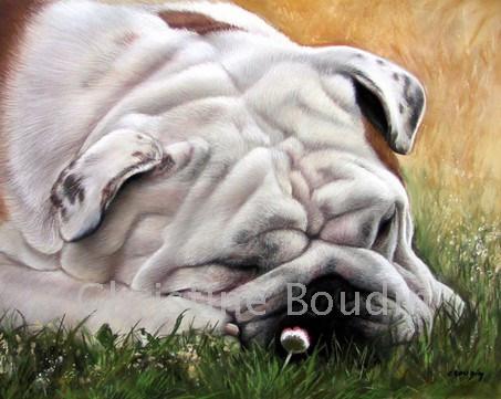 Repos Bullgog Anglais  Peinture de l'artiste Christine Boudin