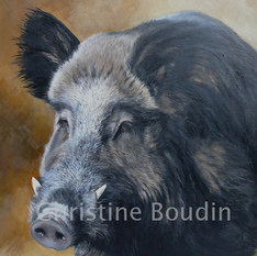 Sanglier 3  Peinture de l'artiste Christine Boudin