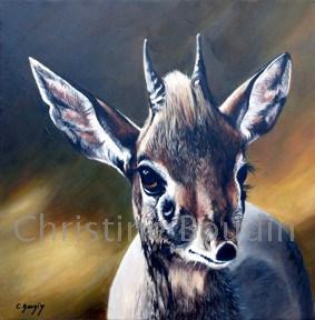 Dik Dik  Peinture de l'artiste Christine Boudin