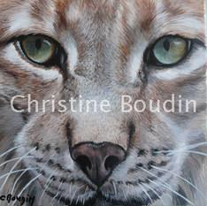 Lynx portrait  Peinture de l'artiste Christine Boudin