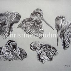 Etude de Bécasse  Peinture de l'artiste Christine Boudin
