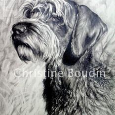 Griffon  korthal  Peinture de l'artiste Christine Boudin
