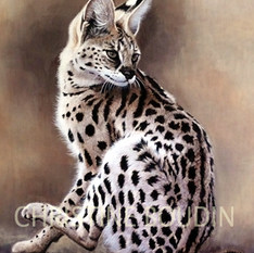 Serval  Peinture de l'artiste Christine Boudin