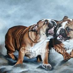 Bulldogs Anglais  Peinture de l'artiste Christine Boudin