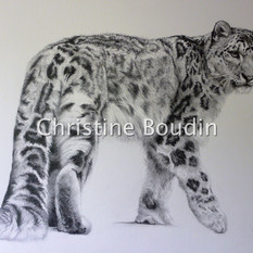 Dessin Panthere des neiges  Peinture de l'artiste Christine Boudin