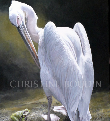 Pélican grenouille  Peinture de l'artiste Christine Boudin