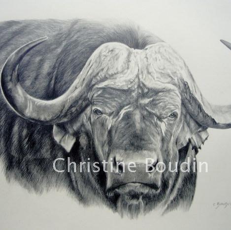 Buffle 2  Peinture de l'artiste Christine Boudin