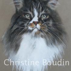 Main Coon  Peinture de l'artiste Christine Boudin