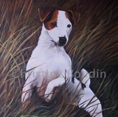 Jagt Terrier  Peinture de l'artiste Christine Boudin