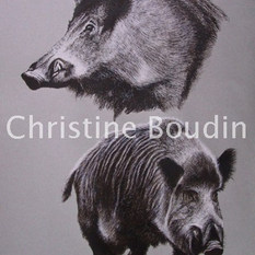 Etude de sanglier  Peinture de l'artiste Christine Boudin