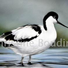 Avocette élegante  Peinture de l'artiste Christine Boudin