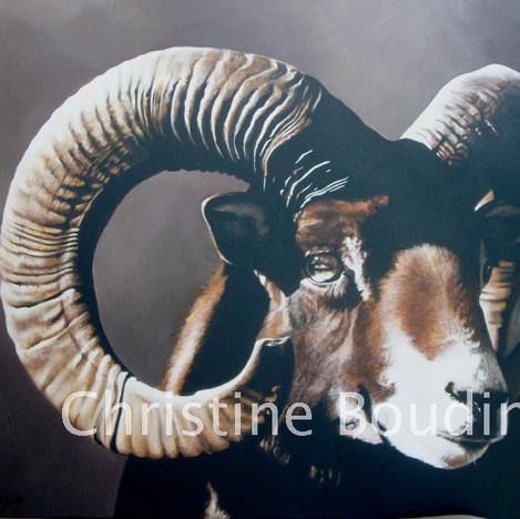 Mouflon  Peinture de l'artiste Christine Boudin