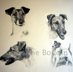 Etude de Fox Terrier  Peinture de l'artiste Christine Boudin