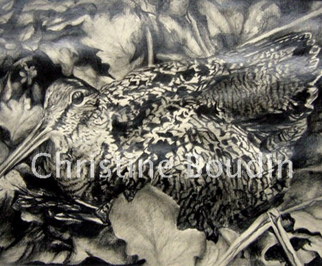 Bécasse 2  Peinture de l'artiste Christine Boudin
