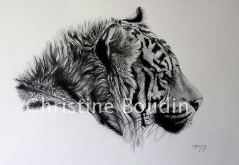 Tigre de Sumatra  Peinture de l'artiste Christine Boudin