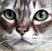 Chat Européen  Peinture de l'artiste Christine Boudin